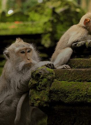 Explore The Sacred Monkey Forest