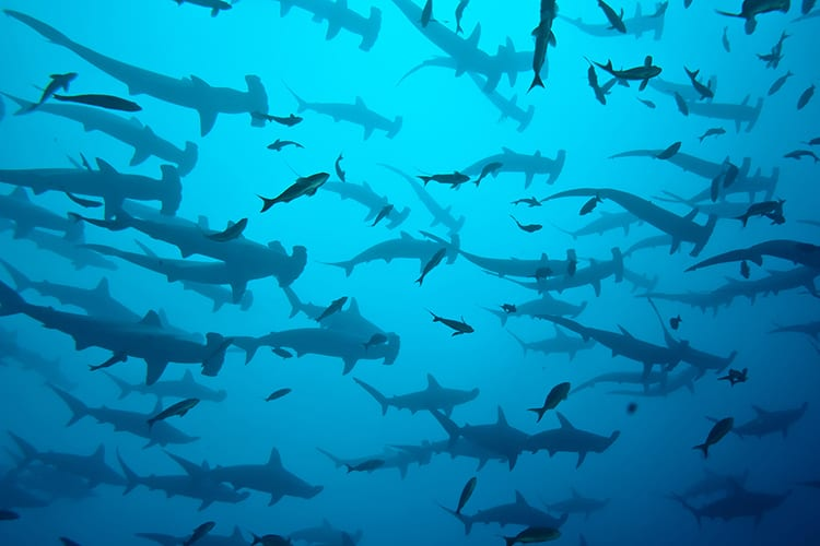 swimming with sharks bachelor party ideas