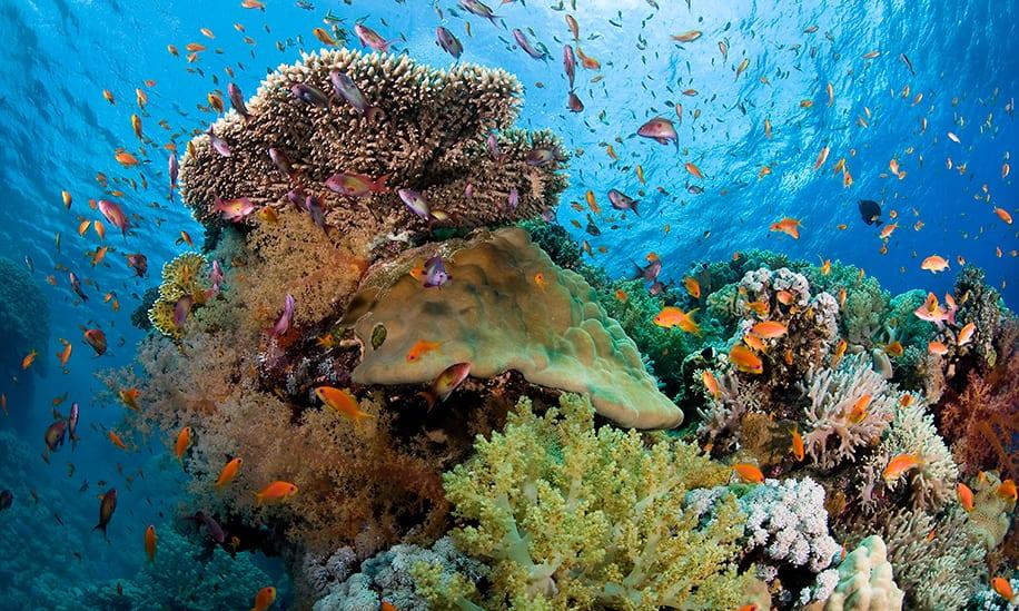 Get underwater Aruba activity