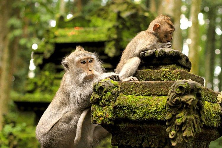 The Sacred Monkey Forest Sanctuary Bali spirituality