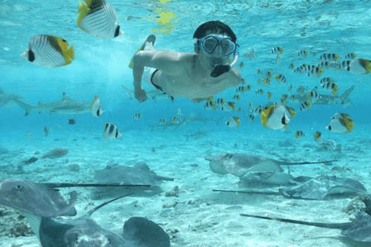 Swim with sharks and rays in Bora Bora