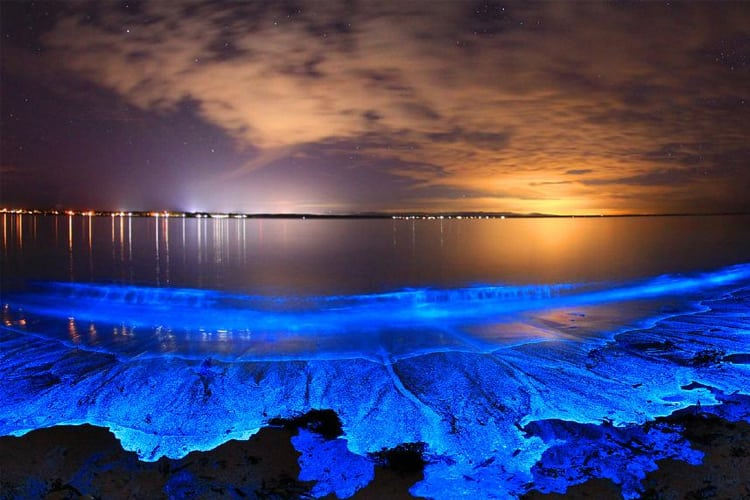 A bioluminescent river in Vieques, Puerto Rico