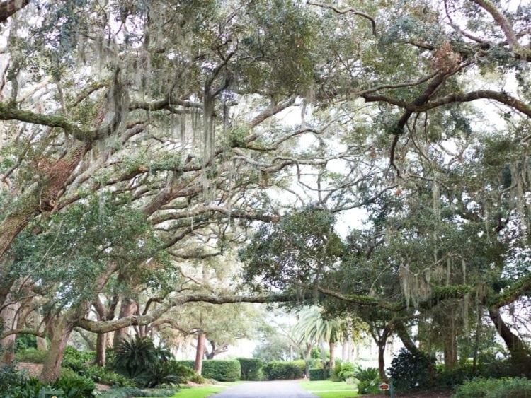 A tree-lined street on Sea Island, Georgia