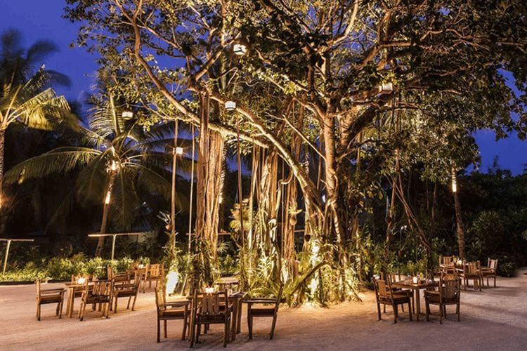 Maldives Honeymoon - View of outdoor restaurant featuring tables and chairs under trees