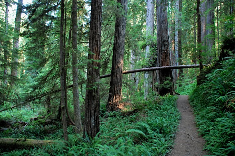 Redwood forests in Northern California from Return of the Jedi