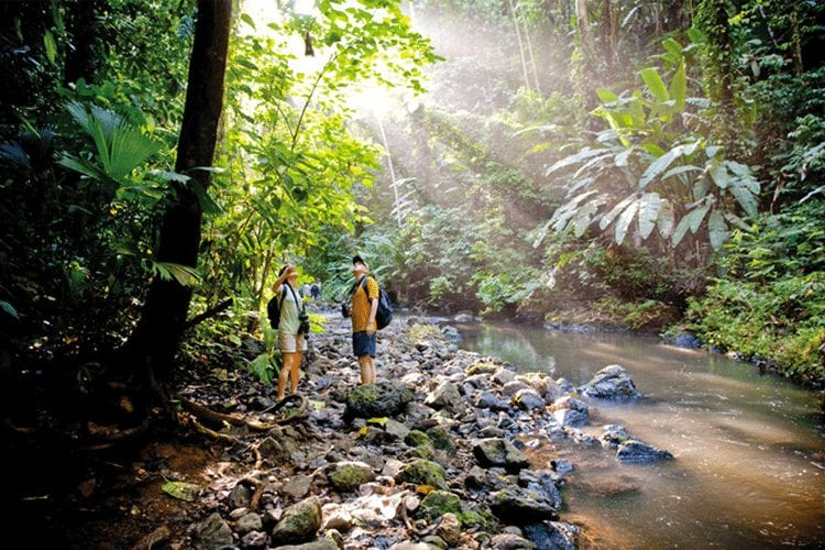Classic Honeymoon Activities in Costa Rica - Corcovado National Park