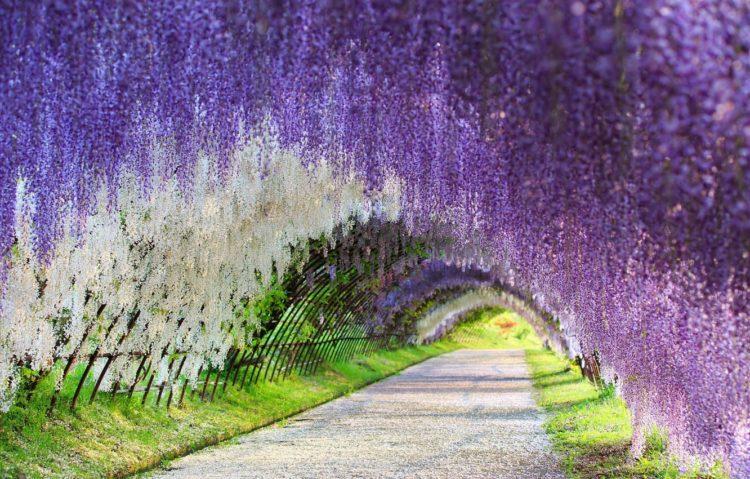 japan flower tunnel